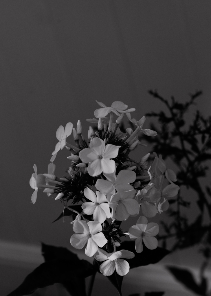 FLOWERS_SDI2860