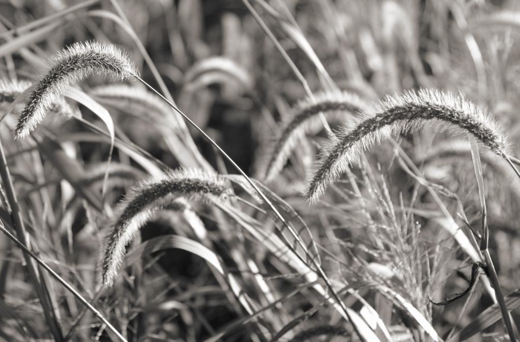 Grass_SDI2944