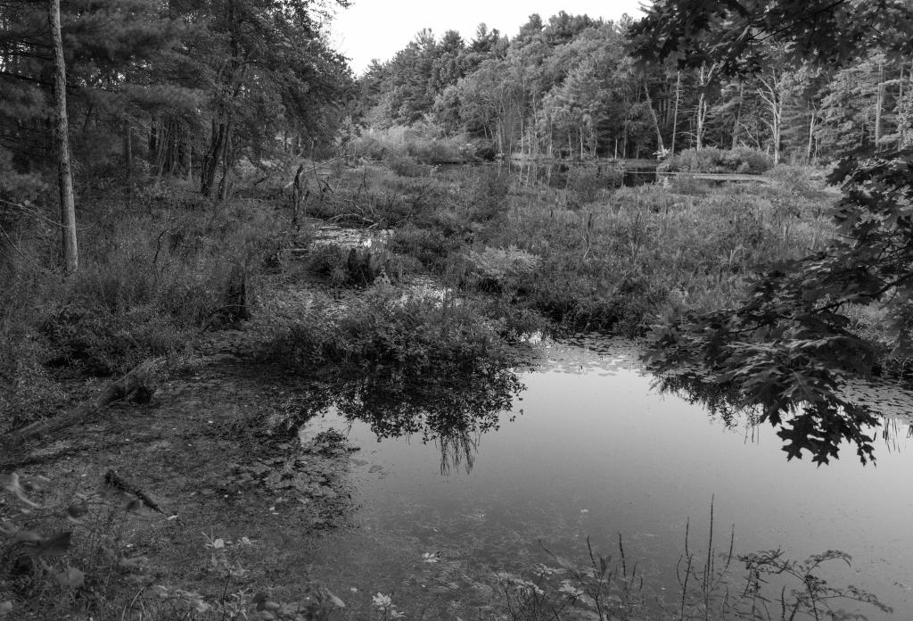 landscape-stow_dsc8905-1