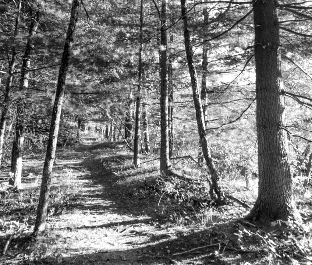 trees-_dsc9010-1