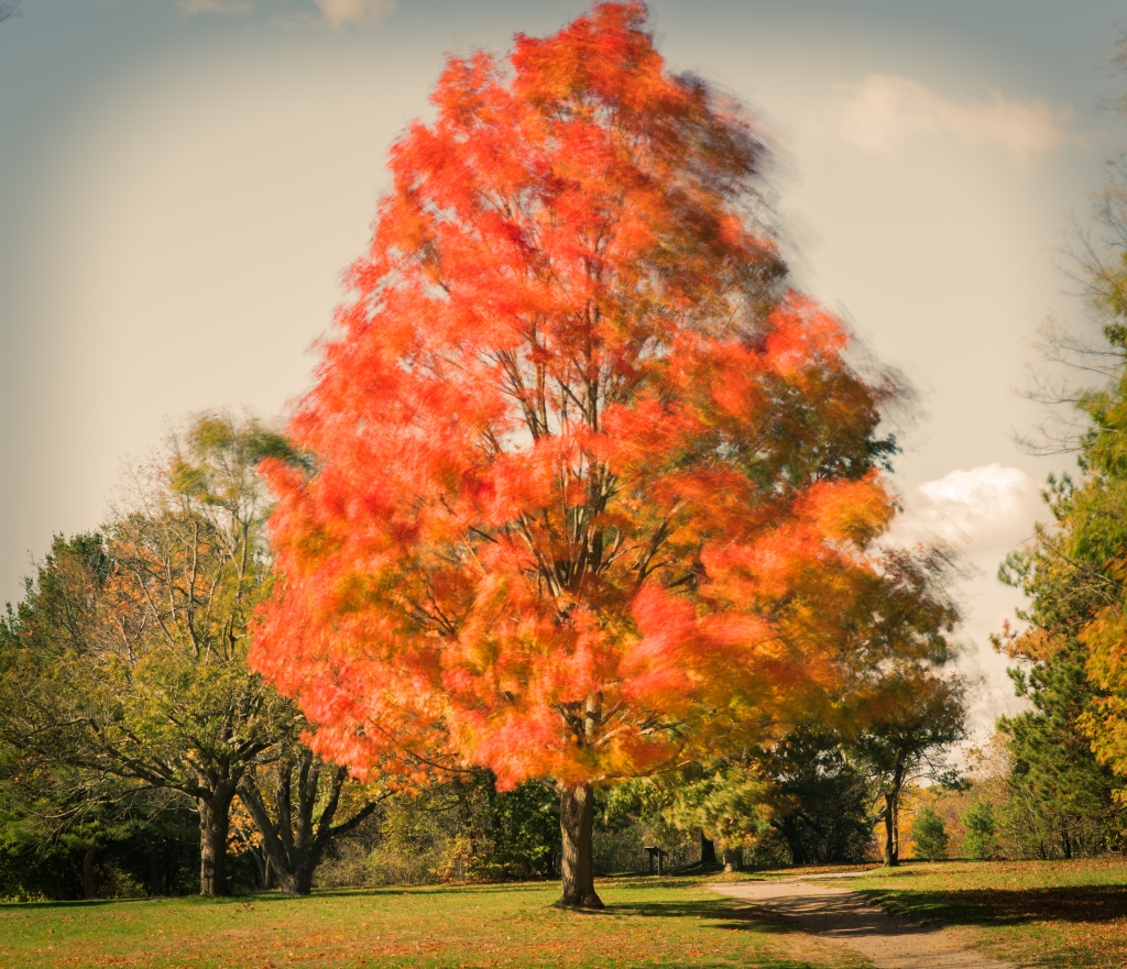 blurred-tree-color_dsc9208-1