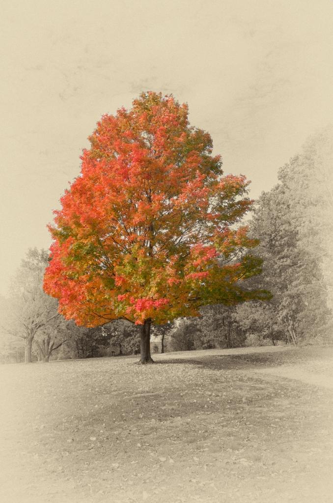 tree-2-l1003448-1