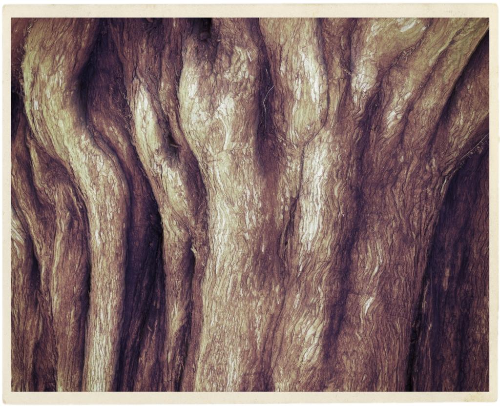 roots_dsc9288-1