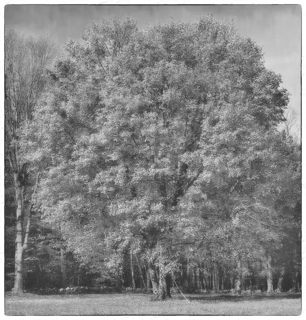 tree-dp2m0796