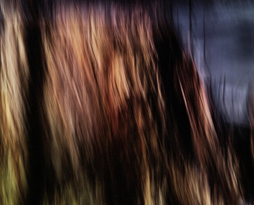 tree-hair_sdi3226